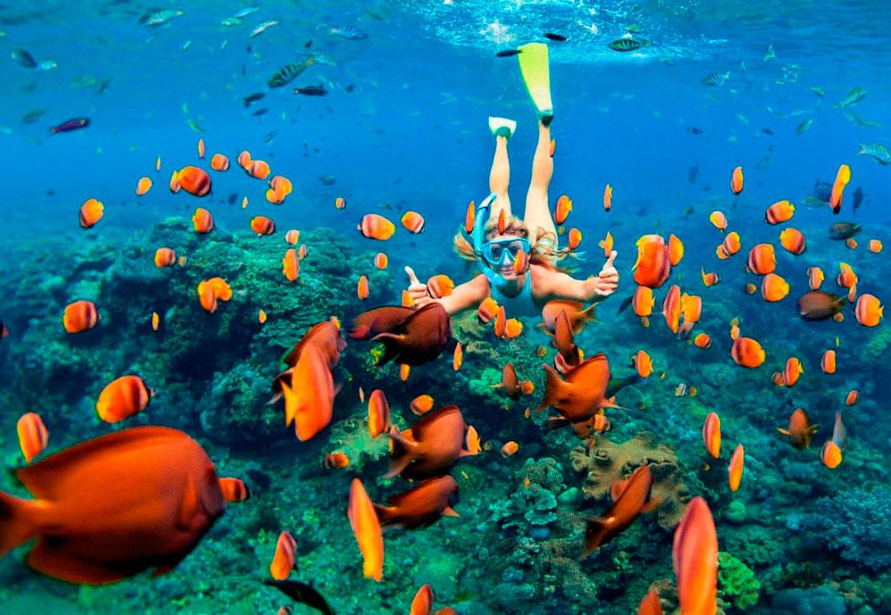 Сноркелинг на Большом барьерном рифе