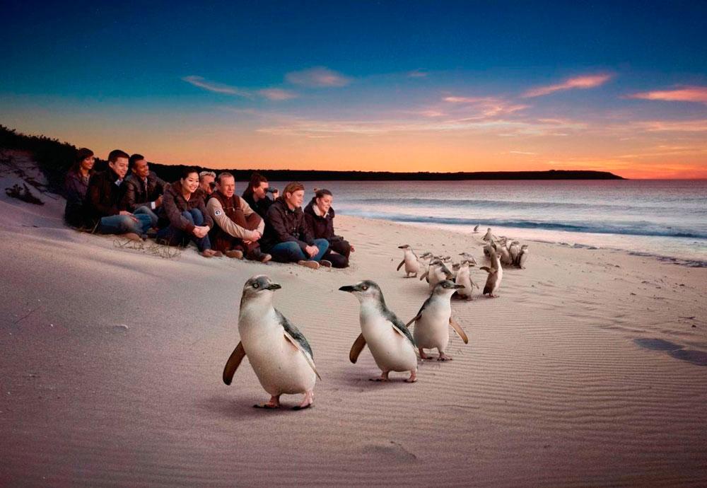 Австралия. Остров Филиппа