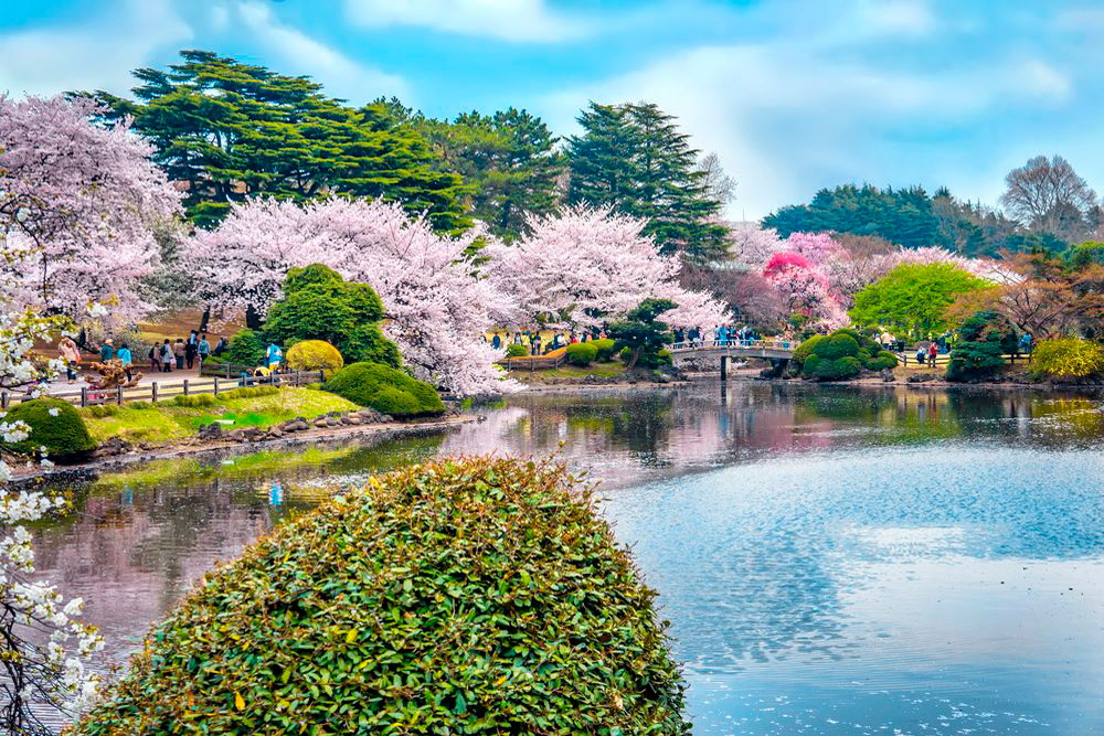 Синдзюку-гёэн императорский парк, Токио