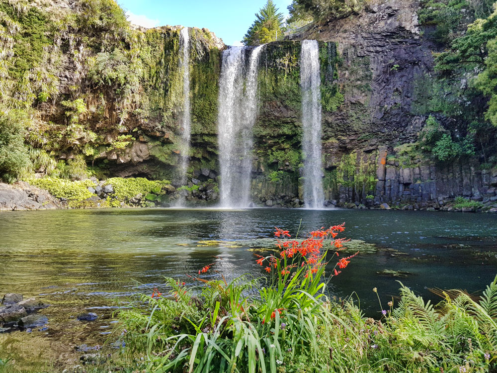Whangarei Falls. Северный остров. Новая Зеландия