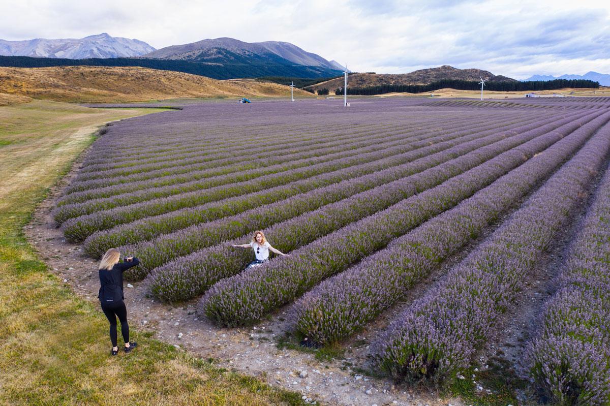 Лавандовое поле, Новая Зеландия