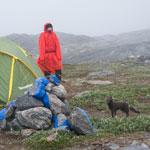 Тур по Гренландии-2018. Неожиданный гость в нашем лагере